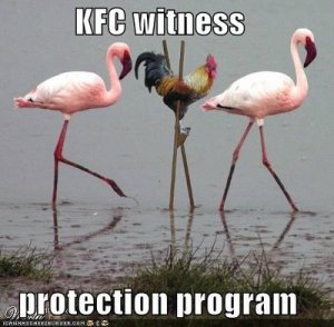 Being social in the witness protection program